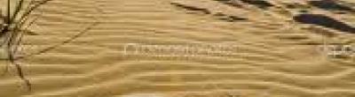 Imatge d'una arrova traçada en la sorra d'una platja