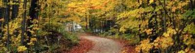 fotogragia bosc